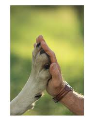 Connection hand and paw